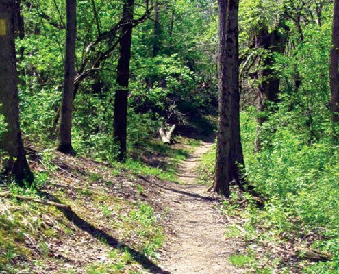 wooded trail in Johnson Hills Park