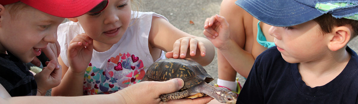 mini campers touching a red-ear slider