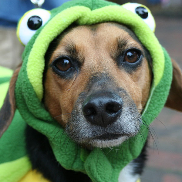 dog dressed up as a frog