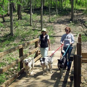 Two women walking their dogs across a bridge at Johnson Hills Park