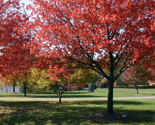 Last gifts: Adopt-a-Tree with engraved markers at Juilfs Park