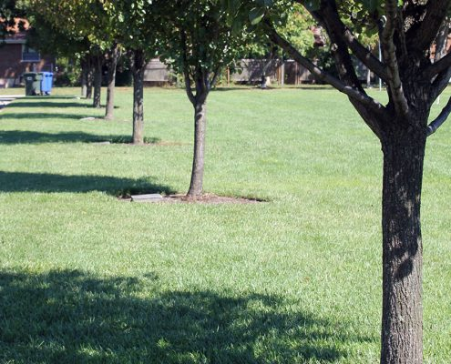 Last gifts: Adopt-a-Tree with engraved markers at Beech Acres Park
