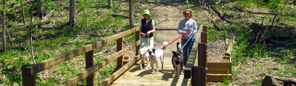 two women walking their dogs across a trail at Johnson HIlls Park