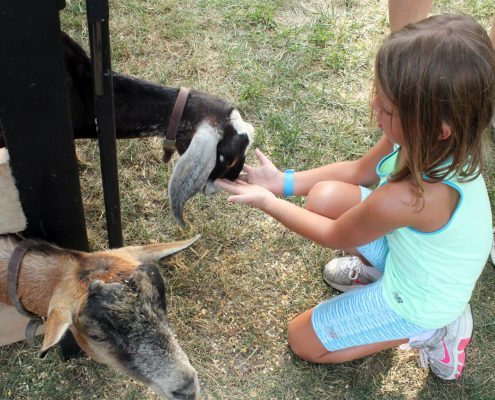 girl feeding goats at Farmer in the Dell
