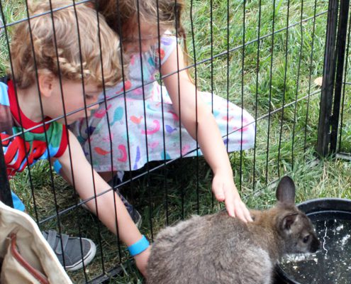 kids petting an animal at Farmer in the Dell