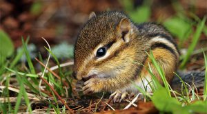 little natures nuts class theme with chipmunk