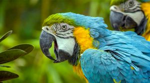 close up of macaw